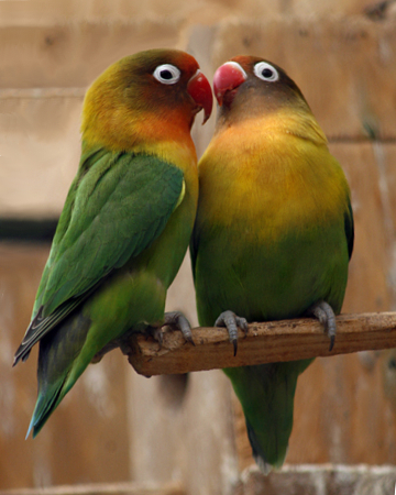 Lovebirds - May she share everything with her husband, including the housework